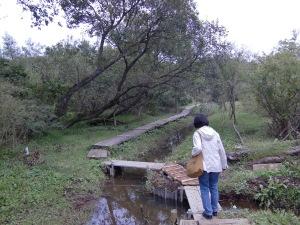 木道の造作もワイルド