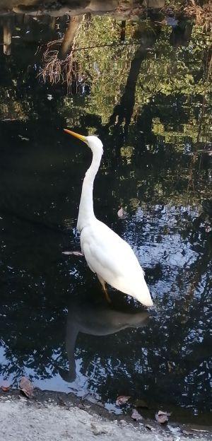 こんな大きな鳥が都会の真ん中に来るなんて不思議。